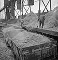 Producing Your Sugar- the Growth and Processing of Sugar Beet in Britain, 1943 D12619.jpg