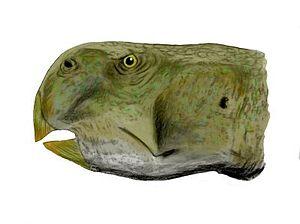Hauterivian - Psittacosaurus