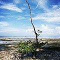 Pulau Owi (Padaido Bawah).jpg