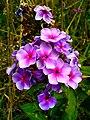 Purple Shades (251814157).jpeg