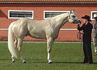 Photograph of a palomino Quarter Horse
