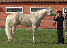 El caballo 220px-Quarter_Horse%28REFON%29-cleaned