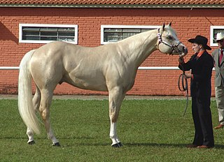 Halter (horse show) Type of horse show class where horses are shown in hand and not ridden