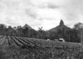 Queensland State Archives 2118 Mounts Beerwah and Coonowrin Crookneck Glass House Mountains c 1934.png