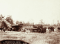 Queensland State Archives 5190 Traction Engine Threshing Plant Danderoo 1899.png
