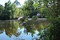 Réserve naturelle régionale des étangs de Bonnelles le 26 mai 2017 - 56.jpg