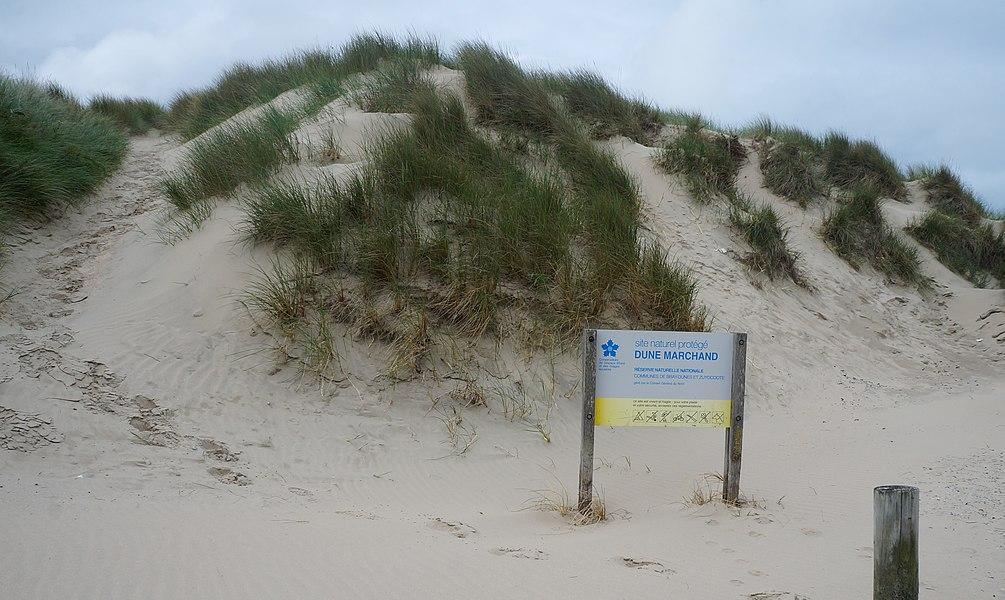 RNN de la dune Marchand Dunes de Flandres  Nord-Pas-de-Calais-Picardie.- France