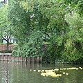 Reading Waterfest duck race - geograph.org.uk - 855333.jpg