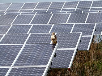 Solar power in Michigan - Red-tailed hawk at University of Michigan NCRC solar array