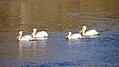 Red River, St. Andrews (500598) (14161472619).jpg
