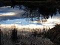 Reflections (00f1998fc2374b4e9066e6735634993e).JPG
