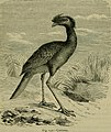 Reptiles and birds - a popular account of their various orders, with a description of the habits and economy of the most interesting (1883) (14565689640).jpg