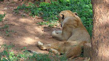 Resting beauty.jpg