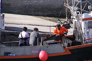 Retour de la pêche à la seiche du fileyeur Jason IV (7).JPG