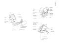 Richer - Anatomie artistique, 2 p. 139.png