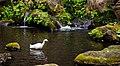 Rikugi-en Gardens, Tokyo; November 2012 (11).jpg