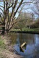 River Cam at Newnham - geograph.org.uk - 1240561.jpg