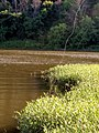 River fishing - panoramio (2).jpg