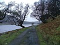 Road and Trees by Loch Killin - geograph.org.uk - 284669.jpg