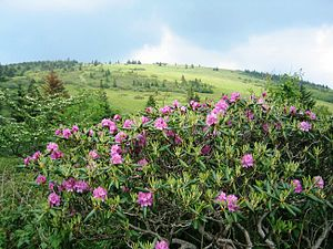Roan Mountain, Tennessee - The Roan Mountain Rhododendron Gardens are located above the community of Roan Mountain
