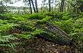 Rotting boat by the lake Gisslaren, hiking trail Upplandsleden, Sweden 10.jpg