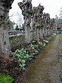Row of heavily pollarded trees at St Mary's church - geograph.org.uk - 701011.jpg