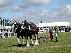 County shows in the United Kingdom - The main ring at the Royal Cornwall Show in June 2004