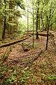 Roztoczanski park narodowy 012a.jpg