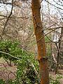 Rusty tree (6958396554).jpg