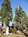 Séquoias géants neuchâtel.JPG