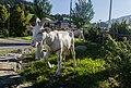 Saanen Goat Statue.jpg