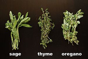 Sage, Thyme and Oregano