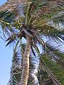 Saint Joseph, Barbados 006.jpg