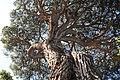 Sausalito, CA 94965, USA - panoramio (2).jpg