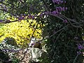 Sayen Gardens (7058934891).jpg