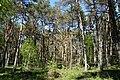 Schleswig-Holstein, Bark, Naturschutzgebiet 30 NIK 4199.JPG