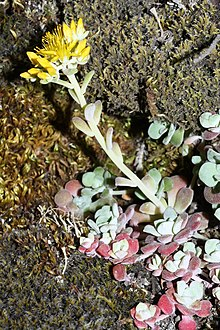 succulents on line from california