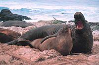 http://upload.wikimedia.org/wikipedia/commons/thumb/9/9d/See_elefanten.jpg/200px-See_elefanten.jpg