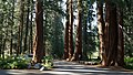 Sequoia National Park Giant Forest.jpg