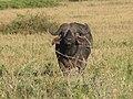 Serengeti National Park-108493.jpg