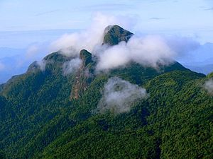 Serra da Mocidade National Park - Image: Serra da mocidade 01