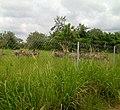 Shai Hills Reserve (1).jpg