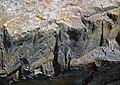 Shatterconed sandstone (Mississagi Formation, Paleoproterozoic, ~2.3-2.4 Ga; Ramsey Lake Road outcrop, Sudbury, Ontario, Canada) 105 (47715701262).jpg