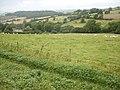Sheep, South Eggardon Farm - geograph.org.uk - 1425764.jpg
