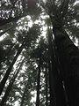 Shei-Pa National Park WANG.GUAN-REN . 004.jpg