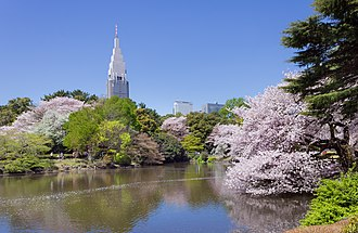 The Garden of Words - Image: Shinjuku Gyoen National Garden sakura 3