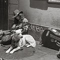 Sidewalk Guitarist with Dog.jpg