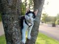 Siri kitten.png