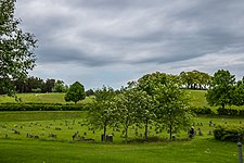 Skogskyrkogarden2.jpg