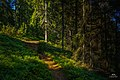 Small forest path at Fjärdlång, Stockholm (Sweden) - panoramio.jpg